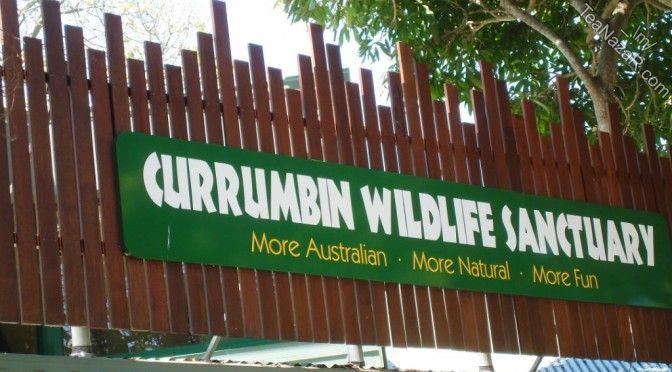 Day 4 – Currumbin Wildlife Sanctuary