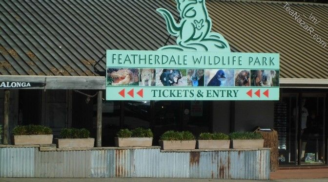 Day 7 – Featherdale Wildlife Park | Shopping at Paddy's Market